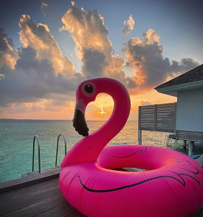 Flamant Rose aux Maldives - Coco island Blog
